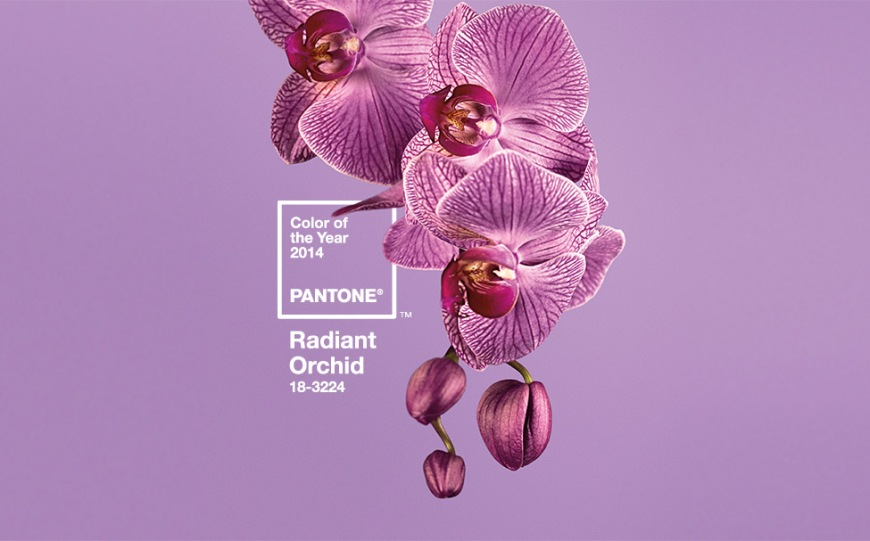 orchid color of the year
