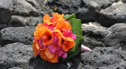 bali-bunga-pucuk-796073