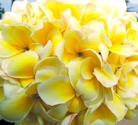 flowers for wedding_balinese yellow flowers