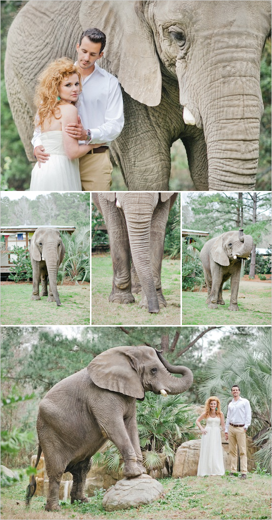 zoo_wedding_ideas